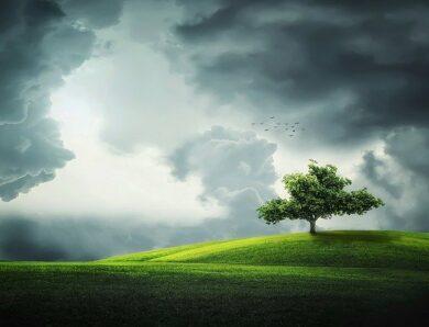 Dlaczego drzewa przyciągają pioruny?